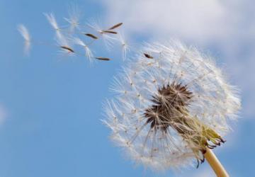 Amor vivido na alegria: quinta-essência da vida cristã